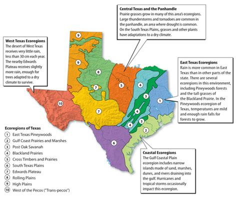 texas biomes map welcome to mrs sandoval s awesome science page