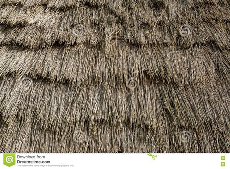 straw thatched roof house with straw thatched roof stock photo cartoondealer