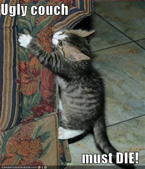 lol couch crazy cat animal humor photo 2854032 fanpop