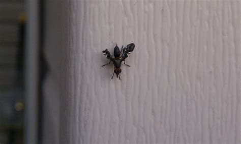 tiny flying bugs in bedroom small black insects in bedroom memsaheb net