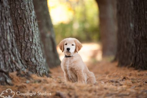 puppy photography nashville photography kona owen cloudlight studios