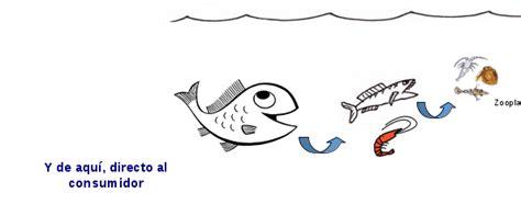 cadena alimenticia krill cadena alimenticia del mar related keywords cadena
