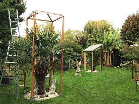 winterschutz palmen winterschutz bei hohen palmen seite 1 winterharte