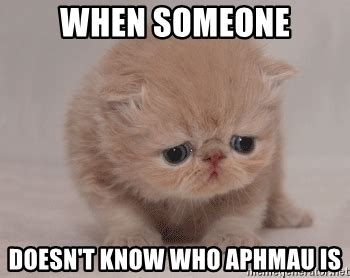 Who Knows Meme - when someone doesn t know who aphmau is super sad cat