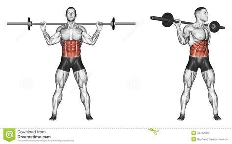 dumbbell bench press twist exercising turns torso with barbell stock illustration