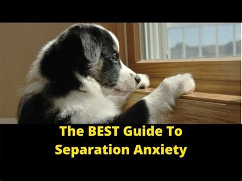 how to stop separation anxiety in dogs funnydog tv
