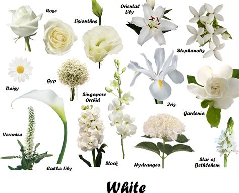 White Wedding Flower Pictures by Photos White Flower List With Picture Drawings Gallery
