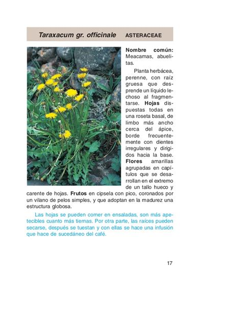 taraxacum lada plantas utiles