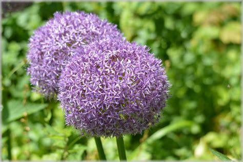 giardini olandesi fiori olandesi giardini 90 immagine gratis domain