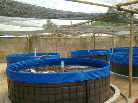 Harga Kolam Terpal A5 harga terpal untuk kolam ikan lele kolam terpal lele