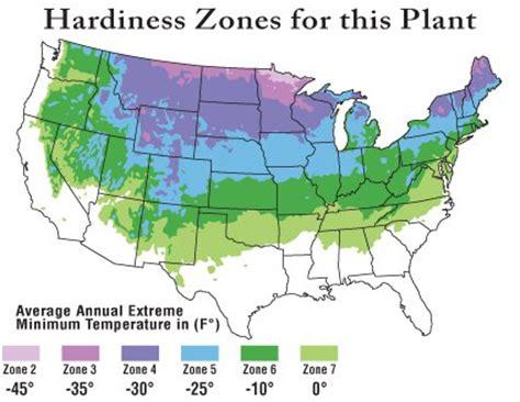 Gardening Zones Colorado Quaking Aspen Seedlings Populus Tremuloides Chief