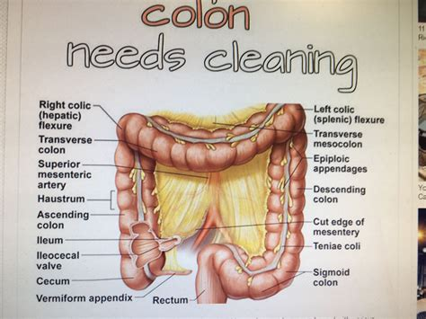 Colon Detox Symptoms by Slimming And Colon Cleansing The Pains Are Caused By The