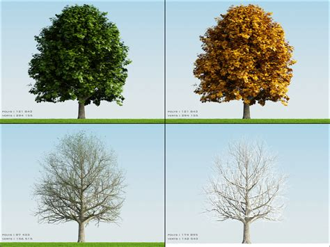 tree seasons come seasons 3d 4 season tree oak001 model