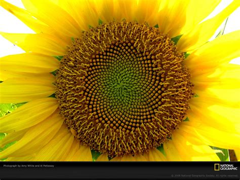 life  color yellow national geographic wallpaper