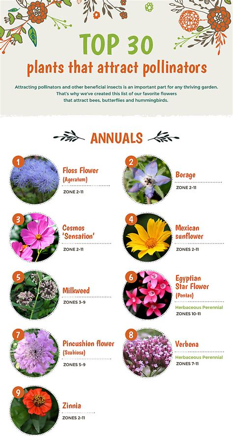 what colors attract butterflies top 30 plants that attract pollinators