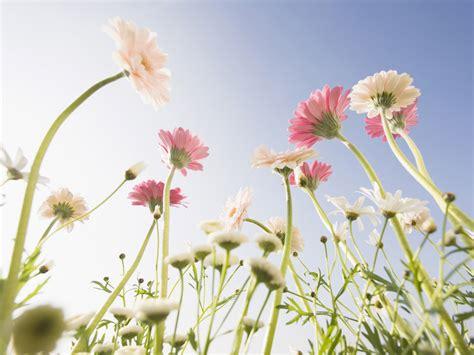 wallpaper flower photo cute flower wallpaper 1024x768 22753