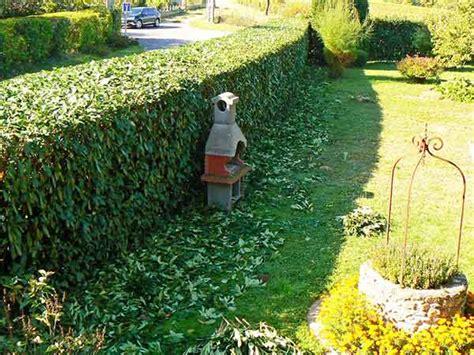siepi da giardino costi potatura siepi faenza forl 236 costi preventivi taglio