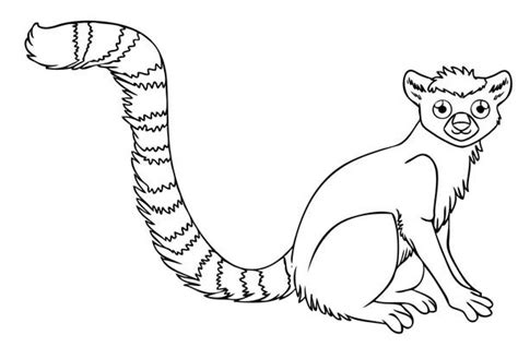 14 lemur coloring page to print print color craft