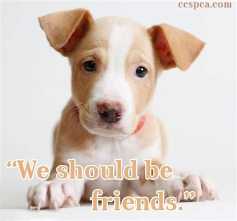 puppy captions puppy caption quot we should be friends quot central california spca fresno ca