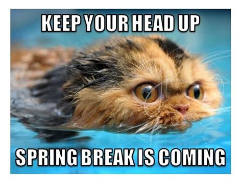 Teacher Spring Break Meme - 17 best images about teacher memes on pinterest teacher