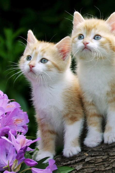 wallpaper of cute cat couple couple cats n007 copul wallpapers litle pups