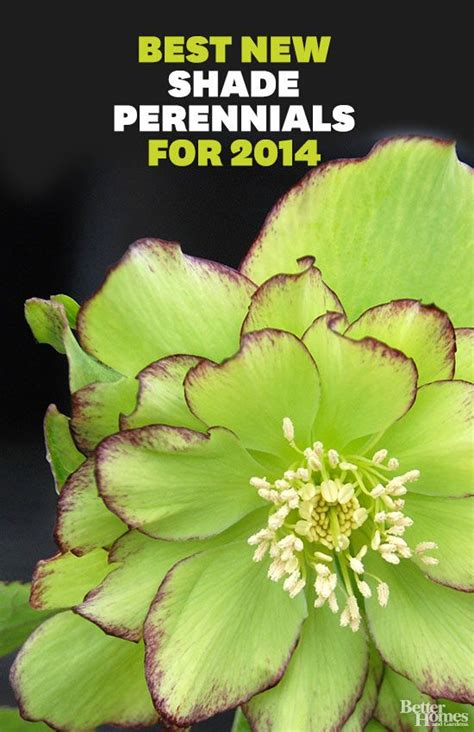 perennial flowers for shade the best new shade perennials for 2014 gardens border plants and shade plants