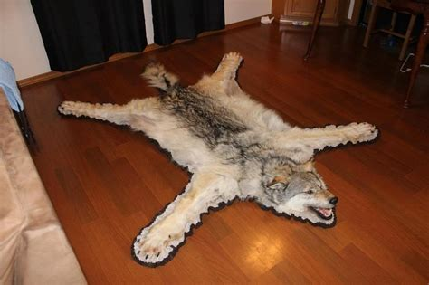 wolf rug taxidermy wolf rug coyote pedestal mount and lifesize coyote sold