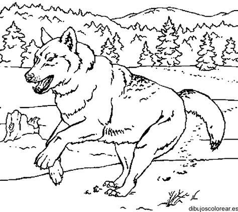 imagenes en blanco y negro de un lobo dibujo de un lobo corriendo