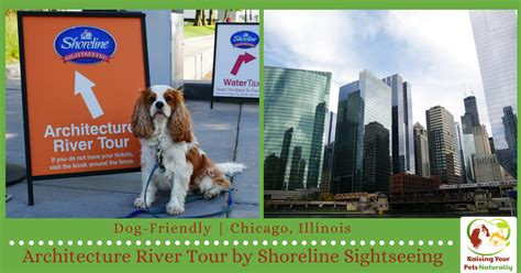 dog friendly chicago attractions dog friendly boat tours - Chicago Boat Tour With Dog