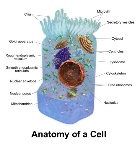 biological membrane descriptions