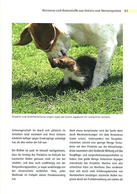 hund kastrieren wann kastration und verhalten beim hund buch bei weltbild ch