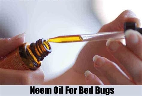 home remedies for bed bugs treatments cure for