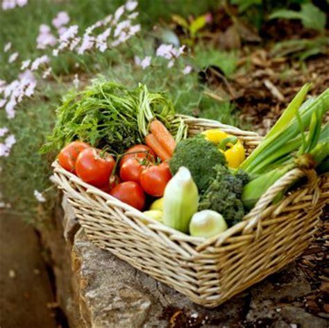 grow vegetable garden vegetable garden hub you can grow vegetables