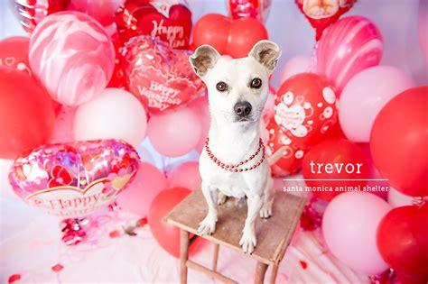 valentines animals animal wallpaper related keywords animal