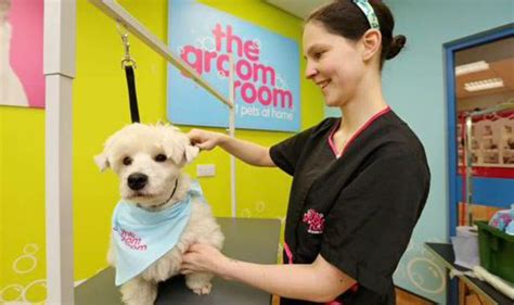 grooming at home pering pets with drying services boost sales at pets at home city business