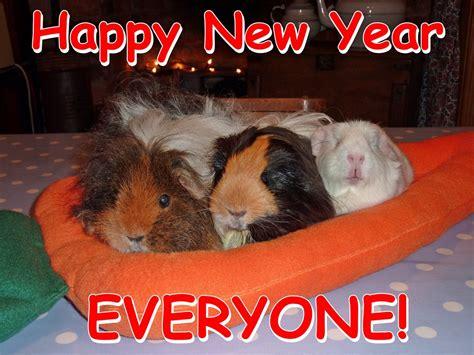new year for the pig magic guinea pig fairymagic me