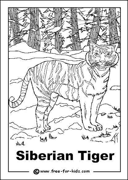 coloring pages endangered animals siberian tiger coloring page 2742
