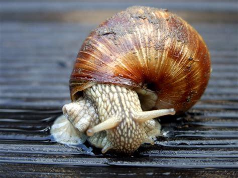 Kerang Laut Koleksi Fox Seashell gambar alam hewan fauna invertebrata kerang laut merapatkan merangkak escargot moluska