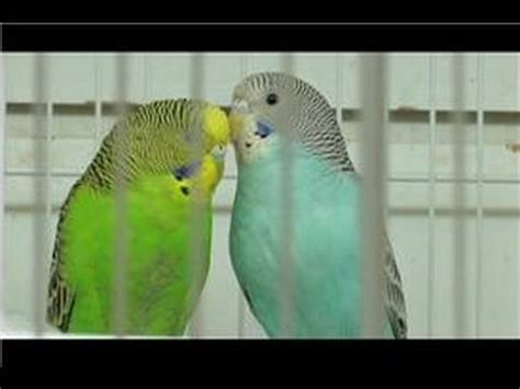 pet wild birds how to take care of a bird youtube