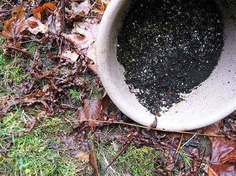 How To Get Rid Of Mosquitoes In Backyard by How Get Rid Of Mosquitoes In Your Yard