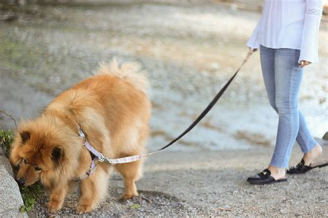 How Do I Keep Dogs The by 6 Ways To Keep Your Active But Cool In The Summer