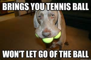 Ball Memes - a squirrel is just a tennis ball thrown by god funny