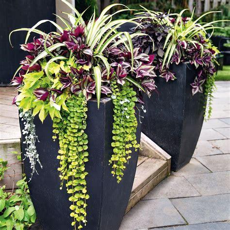 Planters Gardening For Beginners Gardens Plants And Gardening For Beginners Flowers