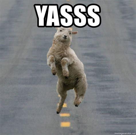 Yasss Meme - yasss excited sheep meme generator