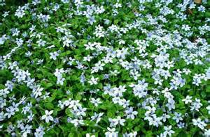 The new low maintenance garden ground cover tips included 187 curbly