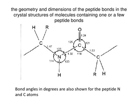 diagram of peptide bond peptide bond structure