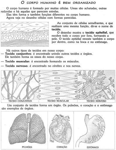 atividades animais herbívoros carnívoros e onívoros