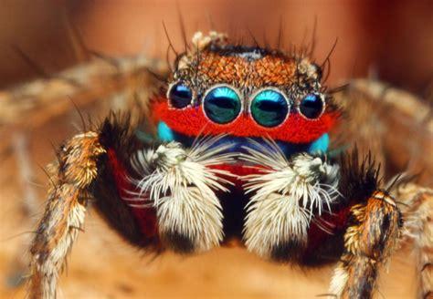 colorful spider colorful tarantula