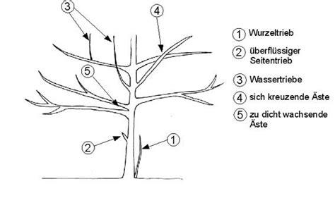 obstbaumschnitt wann baumschnitt geh 246 lzschnitt tabelle wann welchen