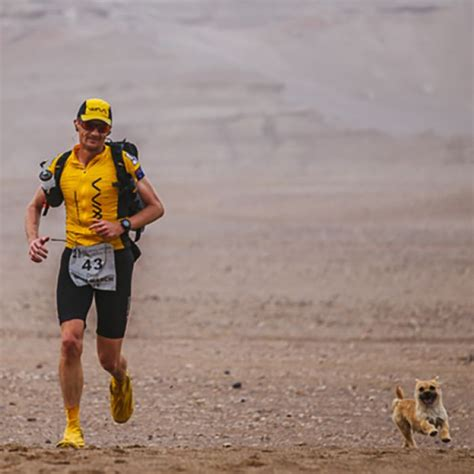 gobi  stray dog reunited  australian runner